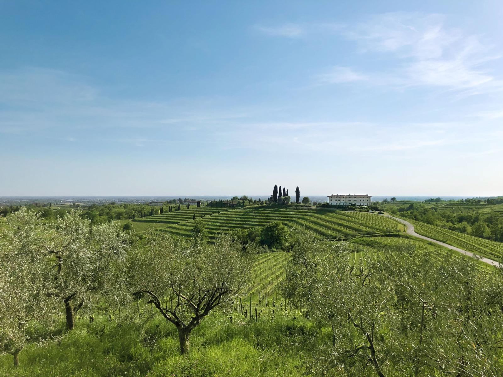 vigne di zamo vineyard