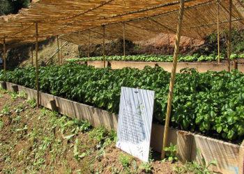 Niasca Portofino Farm