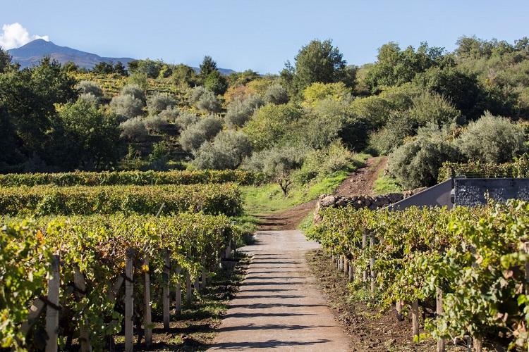 Nerella Mascalese Vineyards