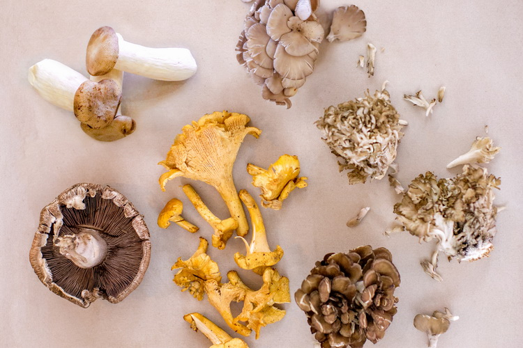 Variety of mushrooms on a table